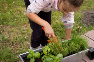 planter les plantes aromatiques